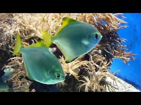 Download Fische im Zoo Aquarium Osnabrück