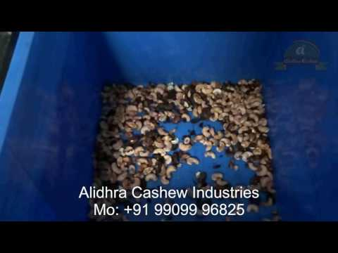 Cashew Nut Processing Plant