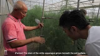 White Asparagus Farm With Chef Richie Lin Of MUME, Taipei