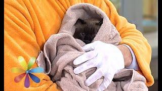 Смотреть онлайн Советы ветеринара о том, как лучше помыть кота