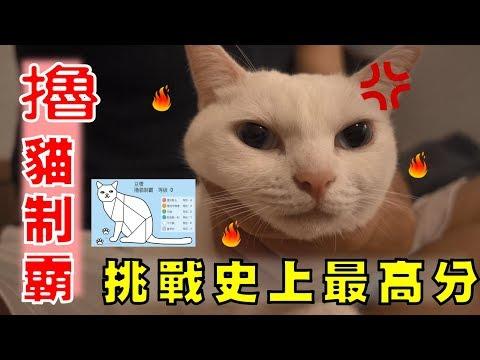 【豆漿 - SoybeanMilk】接受撸貓挑戰!! 豆漿這個分數太扯了