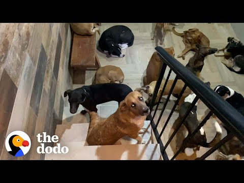 Good Story: Man Lets 300 Dogs Into His Home