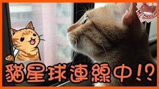 【巧克力】『橘子冰的日常』- 貓星球連線中!? ฅ•ω•ฅ
