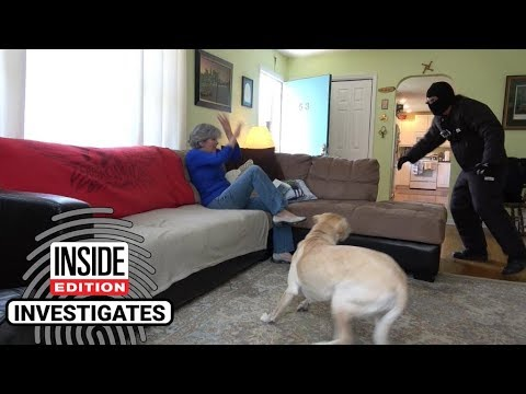 Dogs Tested To See Whether They'd Defend Owner During Home Invasion