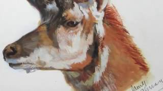 Pronghorn Antelope: SPEED PAINTING In Gouache