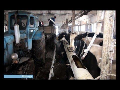 Проведено обследование молочно-товарной фермы ООО «1 Мая» Краснокамского района