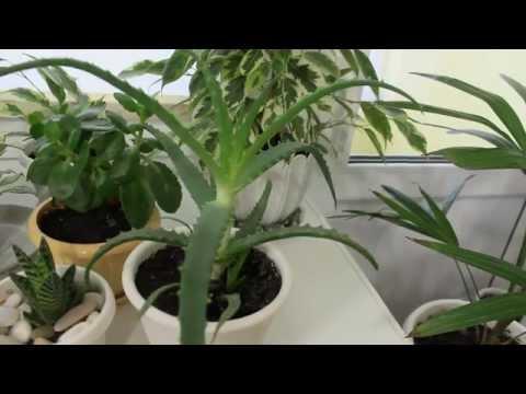 Уход за комнатными растениями зимой. [Надежда и Мир]