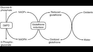 Glucose 6 Phosphate Dehydrogenase Deficiency (G6PD)