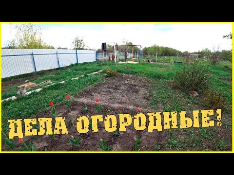 Дела огородные / Экскурсия вокруг дома с Алевтиной / Семья в деревне