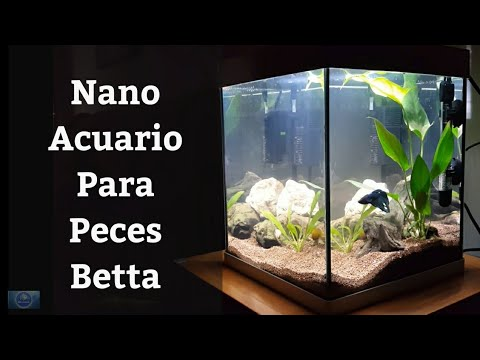 🔵 Cómo Montar Un Nano Acuario Para Bettas,Como Un Pez Betta 1x3 (Acuarios MB)