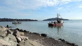 Gone Fishing - Chris Rea