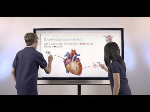 Smart Interactive flat  Panel Display
