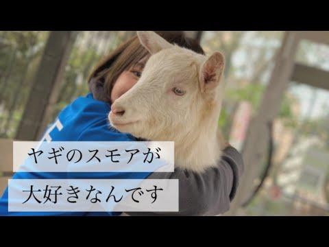 ヤギのスモア、生物園での1年間【成長記録】