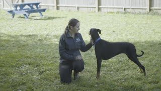 How To Approach a Dog | The Battersea Way