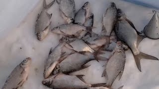 Рыбалка на реке гжать в дубинино
