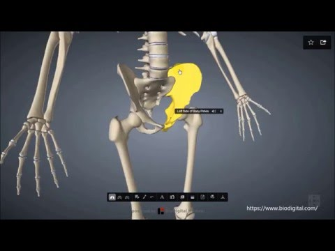 Die Behandlung der Venenvarikose auf den Beinen umsonst