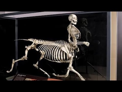 10 Scary Skeletons Ever Discovered!