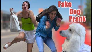 bromas el perro falso
