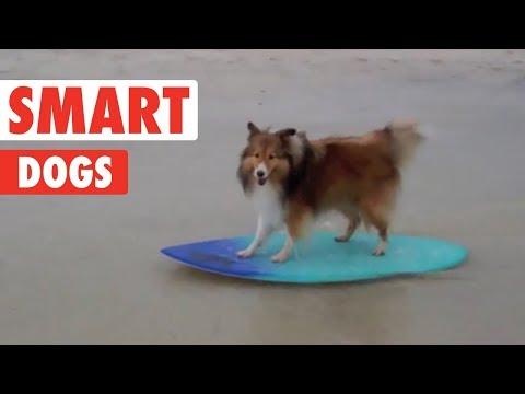 ¿Son Los Gatos Más Inteligentes Que Los Perros? ¡Este Vídeo Te Sorprenderá!