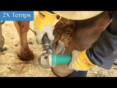 Atopitchesky la dermatite la puérile