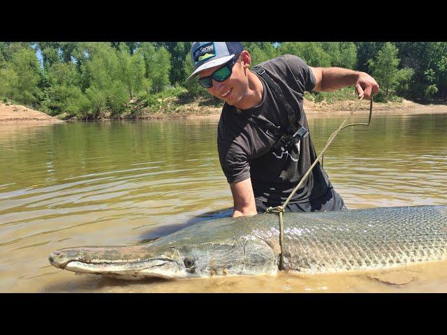 230lb Monster Alligator Gar!!