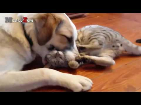 Funny Cats - A Funny Cat Videos Compilation 2017 || NEW HD