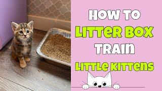 How to Litter Box Train Little Kittens 🐱
