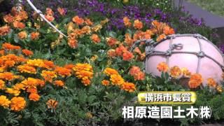 よこはま花と緑のスプリングフェア2015 花壇コンクール褒章授与式