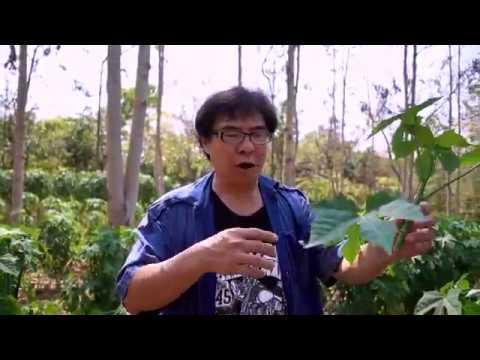 แอนติบอดีรวม Giardia lamblia เอสพีพี