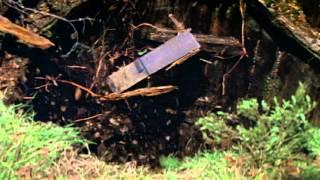 Dolores Claiborne (1995) Video