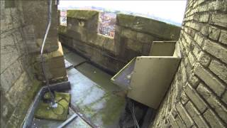 preview picture of video 'Hawk and Owl Trust Urban Peregrines Project Norwich Cathedral'