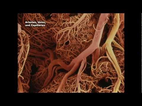 Semințe de in împotriva diabetului