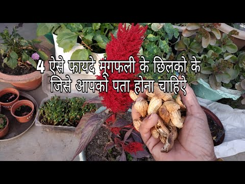 4 ways to use peanut shells in gardening||मूगंफली के छिलको के 4 फायदे Advantage of groundnut shells