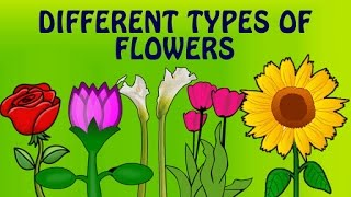 Learn English Flower Names With Pictures   Different Types Of Flowers   Preschool Learning Videos