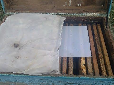 Финальная проверка пчелы на клеща в октябре