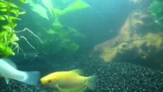 Aquarium / Tindersticks - Seaweed