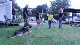 German Shepherd for personal protection. And everyone are safe.