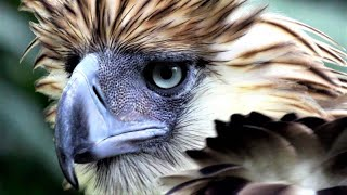 10 Of The Largest Birds In The World