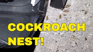 COCKROACHES Galore! BEWARE of the Cockroach Nest! Scrapping Dumpster Dive Microwaves Informs You!