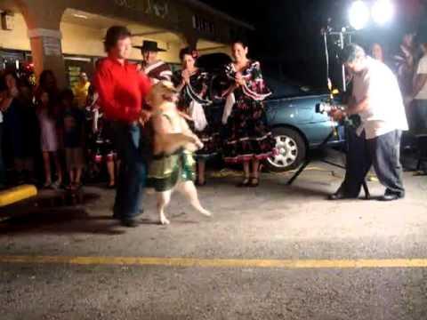 A Dancing Dog!