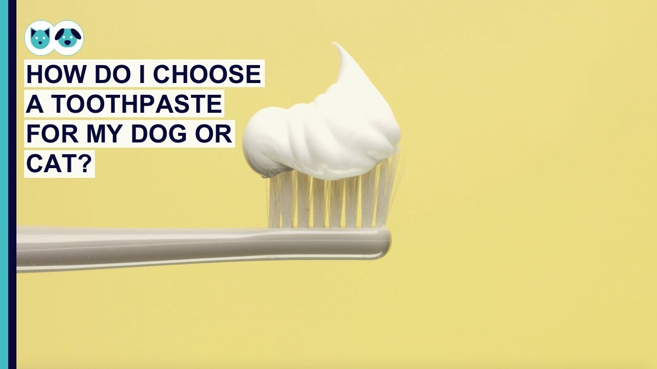 What Is the Best Toothpaste for Dogs and Cats?