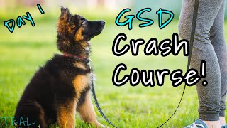 German Shepherd Puppy SURVIVAL GUIDE! - Everything You Need to Know to get Through the First Days
