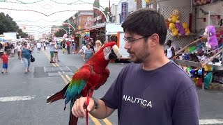 Santina Green Winged Macaw Goes to the Carnival for the First Time