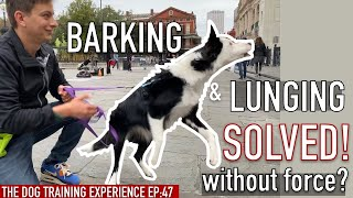My Canine Barks And Lunges: Can I prepare her to cease with out pressure?