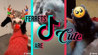 WATCH THIS Before Buying A FERRET | Ferret TikTok Compilation 2020