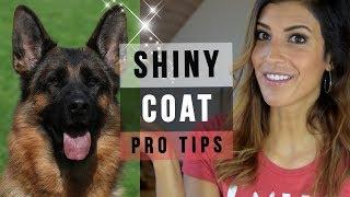 GERMAN SHEPHERD GROOMING: 6 TIPS FOR A SUPER SHINY DOG COAT