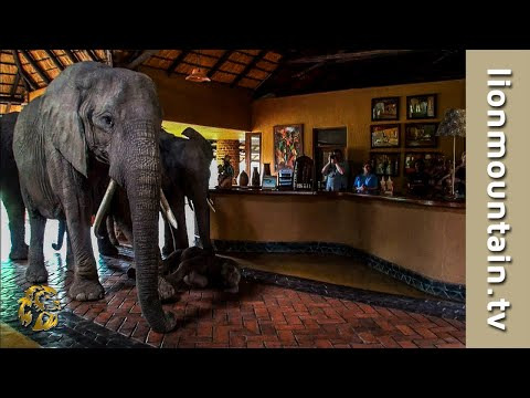 The Safari Lodge Where Elephants Are Welcome