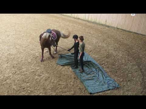 Environmental Training & Agility Course for Horses Kids and Riding ...
