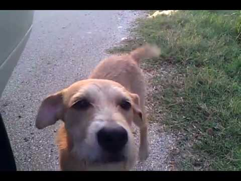 BUDDY, an adopted Terrier Mix in Spring, TX