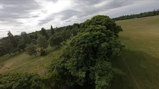 Sub 250g DJI GoPro Hero 6 Quad Tree Surfing